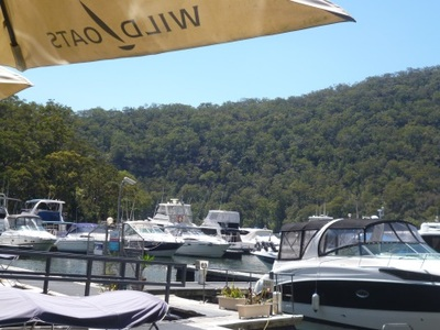 berowra waters, ducks