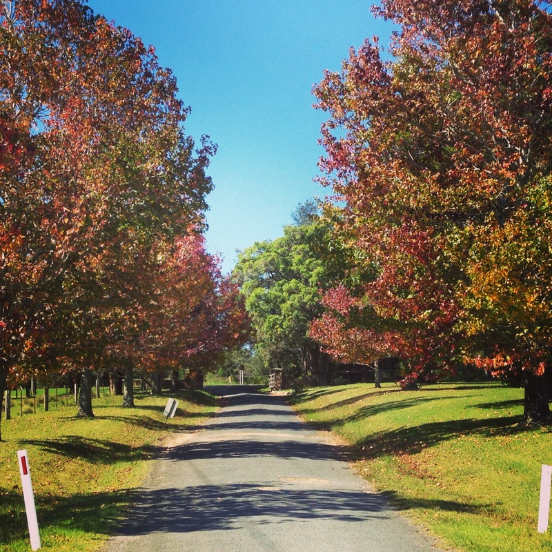 Trends 2017 autumn - Driveway Autumn Leaves Entrance Cupitt S Winery